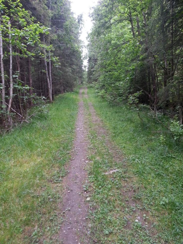 1,5km-3km går det jevnt oppover på skogsvei av varierende standard.